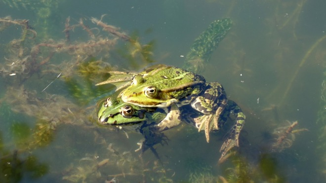 frog-2551684_1920.jpg