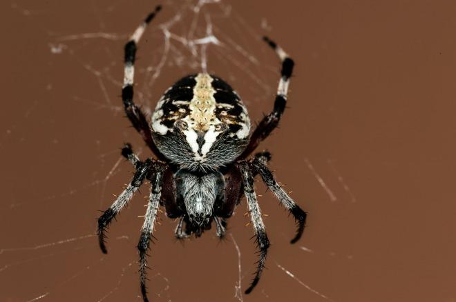 spider-195836_1920.jpg