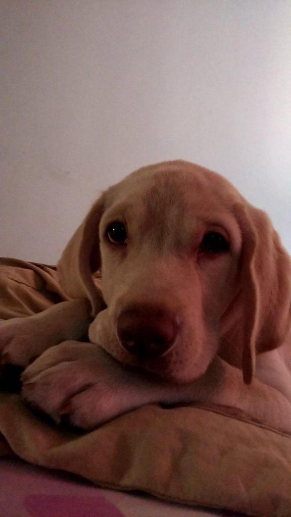 Social Media Editor Amay's dog Jimmy.